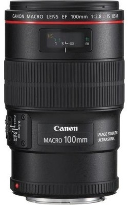 Buy Canon EF 100 mm f/2.8L Macro IS USM Lens: Lens