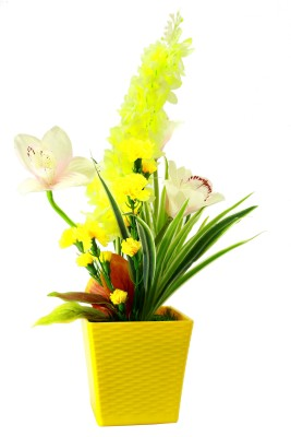 Bengal Blooms Cymbidium