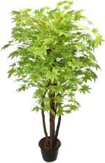 Kusal 2 green maple