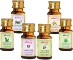 StBotanica Lavender + Lemongrass + Peppermint + Rosemary + Tea Tree + Ylang Ylang Pure Essential Oil