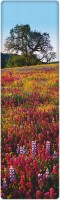 That Company Called If National Geographic - Paintbrush, Lupine And Tickseed Flowers 3D Bookmark (National Geographic, Multicolor)