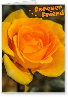 Lolprint Yellow Rose Friendship Day