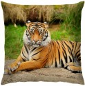 Right Decorative-Tiger Cushions Cover - Pack Of 1