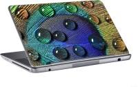 AV Styles Drops On Peacock Feather Skin Vinyl Laptop Decal (All Laptops)