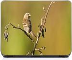 Mayasnaturals Sparrow On Tree