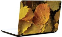 Pics And You Leaves And Petals 6 3M/Avery Vinyl Laptop Decal (Laptops And MacBooks)