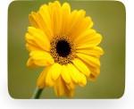 PhotogiftsIndia yellow sunflower Mousepad
