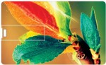 Printland Credit Card Colored Leaves PC80726
