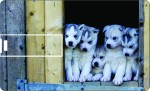 Printland Credit Card Cute Puppies