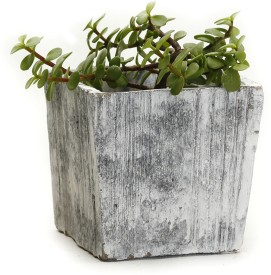 Aapno Rajasthan Plant Container