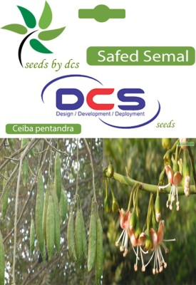 DCS Safed Semal Forest Plant