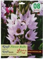 Kraft Seeds Ornithogalum / Chincherinchee Flower Bulbs White