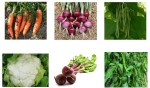 VGreen VGO221 Organic Seeds