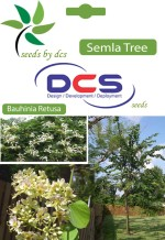 Dcs Semal Forest Plant