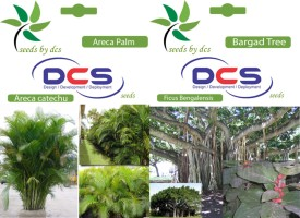 DCS Areca Palm and Bargad Tree (2 Packets of Seeds) Seed