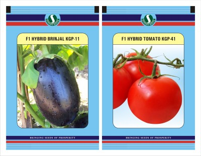 Sungro Seeds Limited Hybrid Brinjal Round And Tomato Seeds Combo Pack