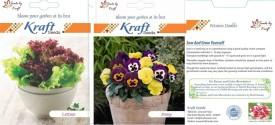 Kraft Seeds Winter For Your Garden Combo [Pack Of 10 Varieties] Seed