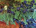 Irises [2] Small By Van Gogh Canvas - Small