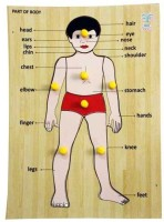 Luk Luck Educational Wooden Toy Part Of The Body (1 Pieces)