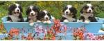 Ravensburger Puzzles Ravensburger Bernese Mountain Dogs