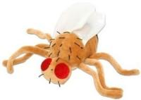 Giant Microbes Fruit Fly (Drosophila Melanogaster) Plush (Orange)
